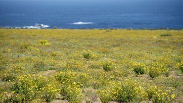 La Bolivie avait autrefois 400 kilomètres de littoral le long du désert d'Atacama.