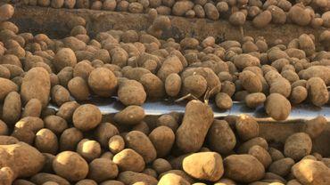 Pommes de terre : l\'équivalent de 30.000 camions bloqués dans les hangars