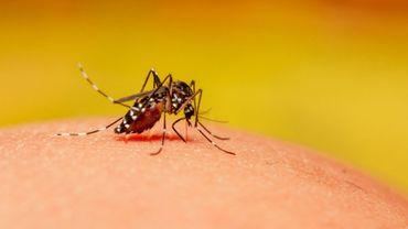 La dengue tue quatre fois plus cette année au Brésil.