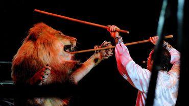 Il ne devrait bientôt plus avoir de lion ni d'autres animaux sauvages dans les cirques anglais