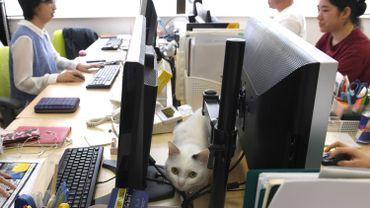 """""""Ronronthérapie"""" au Japon: des chats contre le stress au bureau à Tokyo"""