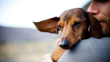 Ces maladies que les chiens peuvent détecter.