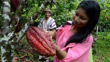 Tomas Bardales et sa fille, indigènes Ashaninka de la communauté Quempiri, récoltent des fèves de cacao, dans une plantation près du village de Quempiri, dans la vallée des fleuves Apurimac, Ene et Mantaro (Vraem, centre) au Pérou, le 30 juin 2017
