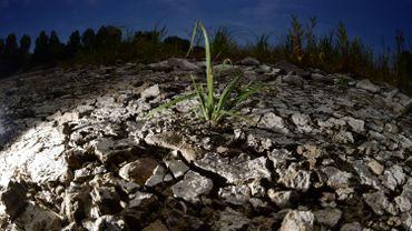 En Flandre occidentale, la sécheresse pousse les agriculteurs à économiser l'eau.