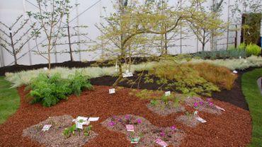 Les orchidées de Tinlot récompensées aux Floralies gantoises