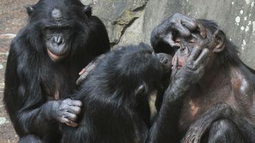 Pour un Américain sur 3, l'homme n'a jamais ressemblé à un singe. il est arrivé sur Terre tel quel.