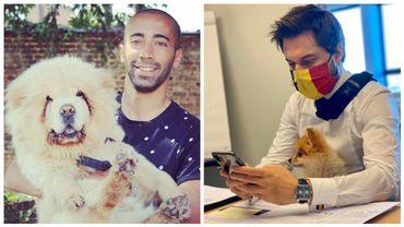 Pamuk, le chien de Sammy Mahdi et Liloo le chien de Georges-Louis Bouchez.