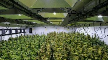 Alternatives solutions, une plantation de marijuana à visée médicale à Washington DC le 20 avril 2016