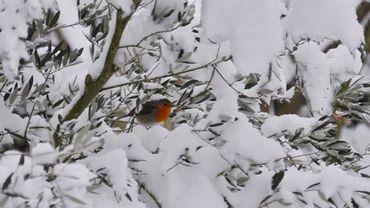 neige à Orshof