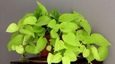 Soigner ses plantes d'intérieurs pendant les vacances