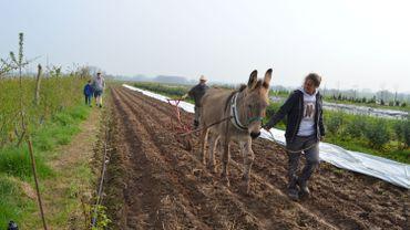 Le Buisson, entreprise de maraîchage où Laurent Hulsbosch travaille la terre avec des ânes, a ouvert ses portes à l'occasion de l'opération Week-end Wallonie bienvenue.