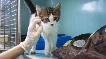 Liège: les adoptions d'animaux en hausse pendant le confinement