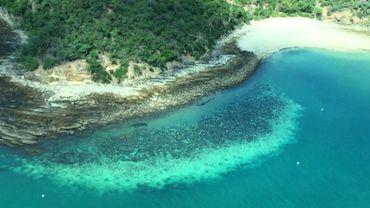 Photo aérienne non datée remise le 6 avril 2020 par le ARC Centre of Excellence for Coral Reef Studies de la  ames Cook University, montrant une portion de la Grande Barrière de corail affectée par le blanchissement.