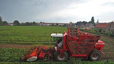 Pour la Confédération des Betteraviers Belges, il y a un risque que certains agriculteurs travaillent à perte. (Image d'illustration)