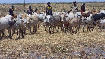 Les tribus d'éleveurs vont devoir abandonner leurs troupeaux.