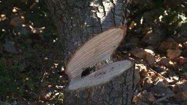 Une partie des arbres du square Jacques Franck va être abattue.