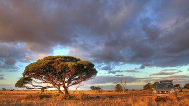 Nullarbor Plain, Australie. Balade dans le Bush australien.