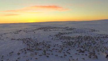 La migration des rennes dans un désert de neige filmée par un drone