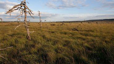 La réserve naturelle des Hautes Fagnes photographiée par le talentueux Franck Renard