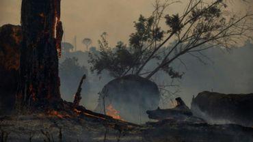 Vue d'une zone brûlée de la forêt à Altamira, Etat de Para, le 27 août 2019.