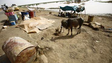 Les dégâts causés par les inondations dans l'état de Kassala.