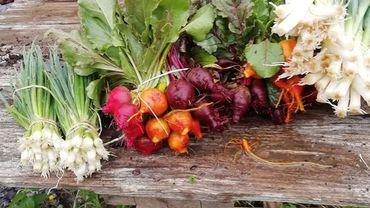 Les Jardins de Galinette: légumes rares et bio