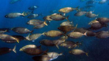 Premier avril oblige, retour sur les poissons du jour
