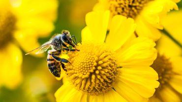 Les portables pourraient jouer un rôle dans la mortalité des insectes, selon une étude.
