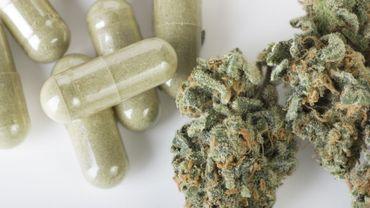 La radula, une mousse plus efficace et moins psychoactive que le cannabis