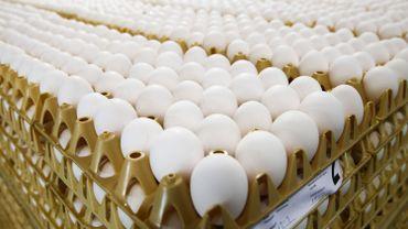 """""""Le consommateur peut aller acheter ses œufs au magasin puisque s'ils se retrouvent dans les rayons, c'est qu'il n'y a pas eu de contamination de l'œuf"""" veut rassurer l'AFSCA."""