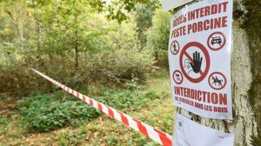 """Peste porcine africaine: la Commission européenne valide la réduction de la """"zone PPA"""" en province de Luxembourg"""