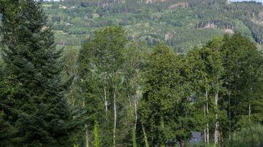 """Parmi les préconisations phares, la création d'un """"fonds pour l'avenir de la forêt."""