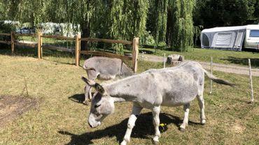 Installer sa caravane, près des ânes, au cœur de la nature