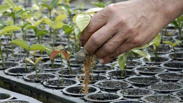 Des chercheurs créent une plante génétiquement modifiée afin de capter davantage de carbone polluant