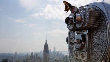 Les animaux changent de taille quand ils vivent en ville