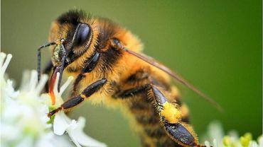 Apiculteur cherche abeilles