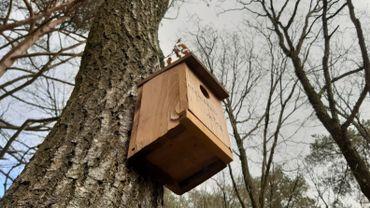 Le Golf de Spa a fait appel à un ornithologue pour placer correctement ses 100 nichoirs.