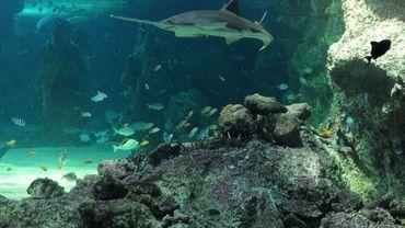 L'Australie ouvre officiellement la plus grande réserve marine du monde