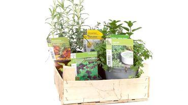 Confinement : des bacs de plantes à recevoir gratuitement chez soi