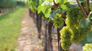La route des vins belges mérite le détour !