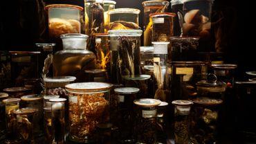 MAC' s - Fiona Tan L'Archive des ombres - Depot still