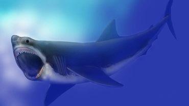 Le mégalodon, requin géant, a été victime de la première extinction de masse liée... aux glaciers