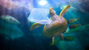 Sacs, fils de pêche, emballages : le catalogue des plastiques qui étouffent les animaux marins.