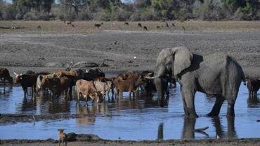 La sécheresse menace des milliers d'animaux dans le sud de l'Afrique