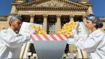 Des militants de l'ONG de protection des animaux Peta jettent des poussins en peluche dans une fausse broyeuse pour protester contre la destruction industrielle des poussins mâles dans les élevages, devant le tribunal administratif de Leipzig, le 13 juin 2019