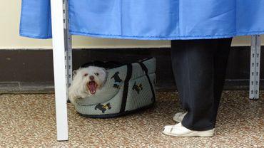 Les chiens ont leur place jusque dans les endroits les plus inattendus.