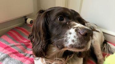 Une Bruxelloise retrouve son chien 6 ans après l'avoir perdu
