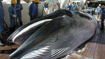 """Pêche commerciale à la baleine au Japon: """"En décalage par rapport à la communauté internationale"""""""