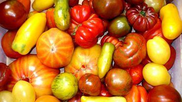 Des tomates sans goût