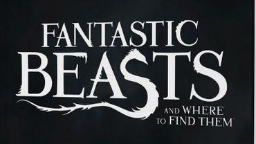 """J.K Rowling va publier le scénario des """"Animaux fantastiques"""""""